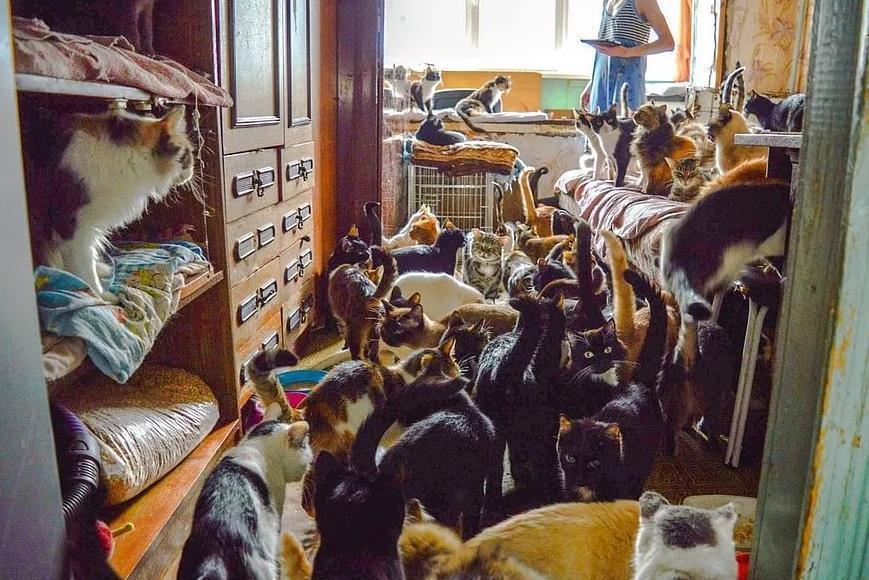 130 кошек в маленькой квартире: страдают соседи и питомцы, а государство принимает меры