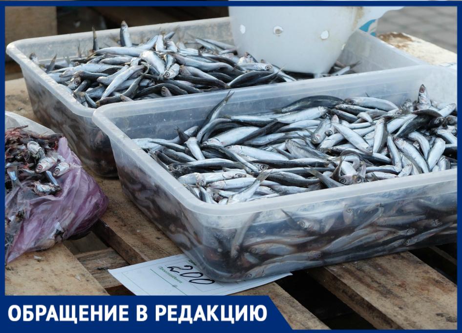 Протухшая хамса становится визитной карточкой Новороссийска