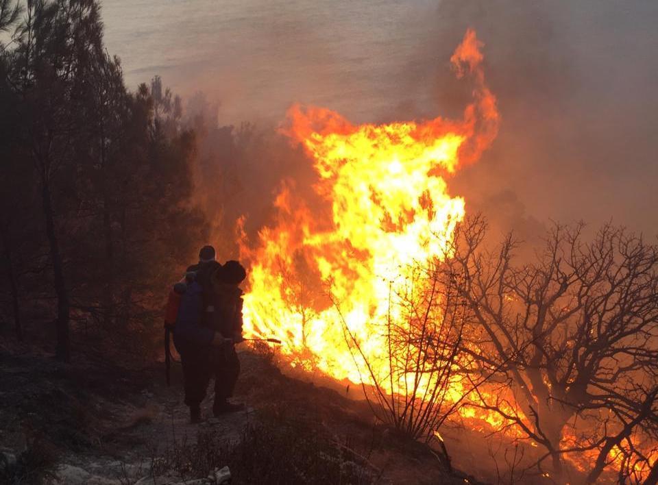 Больше 3 часов все структуры Новороссийска тушили пожар на Колдуне