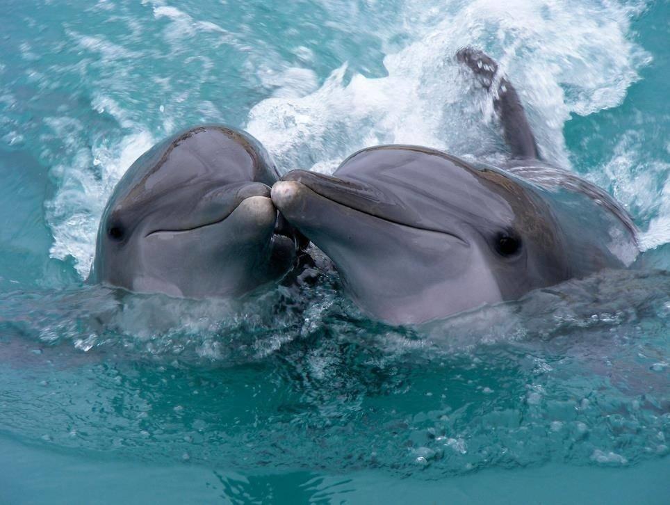 Всемирный день китов и дельфинов пройдёт в Новороссийске при +30