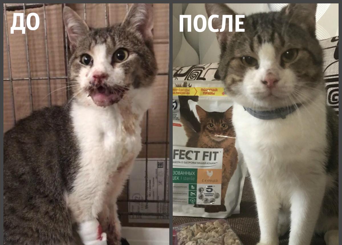 Новороссийцы спасли жизнь умирающему коту Малышу