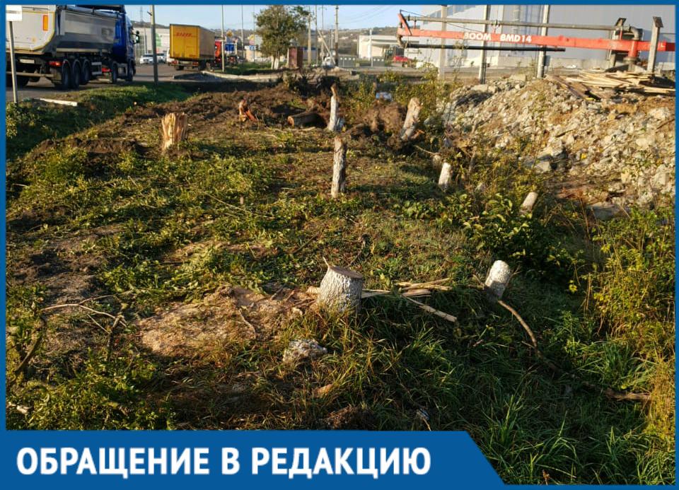 За ночь вырубили деревья под Новороссийском