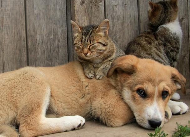 В Международный день бездомных животных в Новороссийске обойдётся без дождя