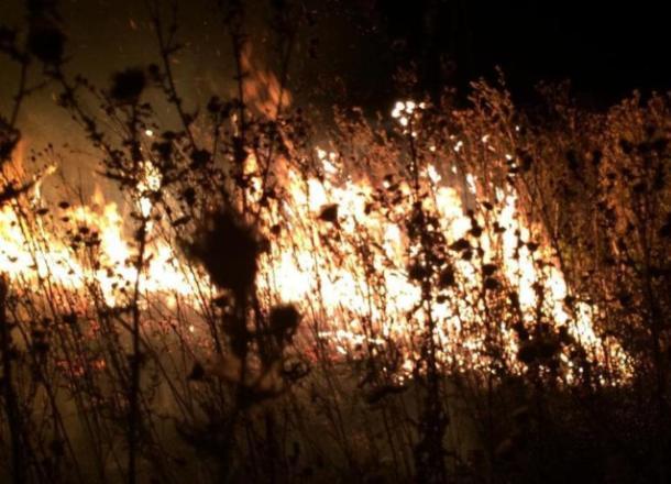 Вспыхнувшую траву под Новороссийском тушить пришлось почти 3 часа