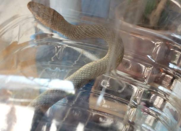Если в Новороссийске «раззяпить» дверь, то может и змея заползти