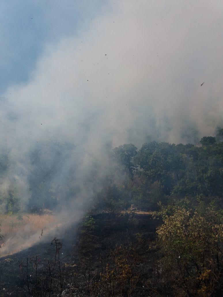 Стала известна возможная причина пожара на Колдуне в Новороссийске