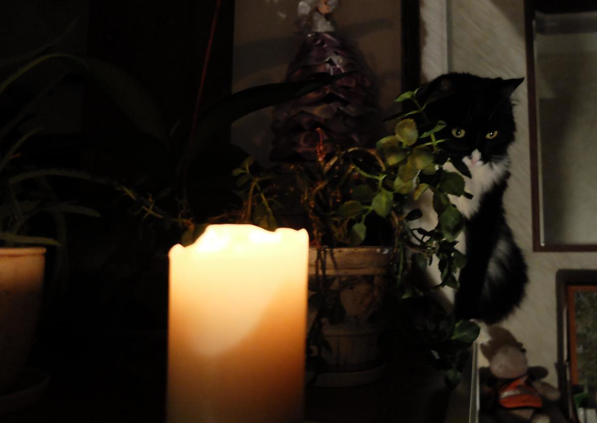 В преддверии праздника энергетики «порадовали» новороссийцев