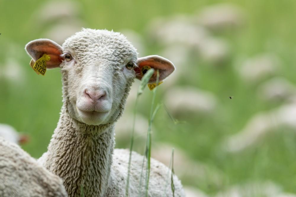 25 тонн овечьих шкур и 54 тонн мороженой рыбы задержано в порту Новороссийска