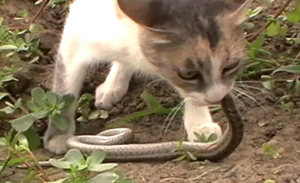 Кубанские коты настолько суровы, что борются со змеями плечом к плечу со спасателями