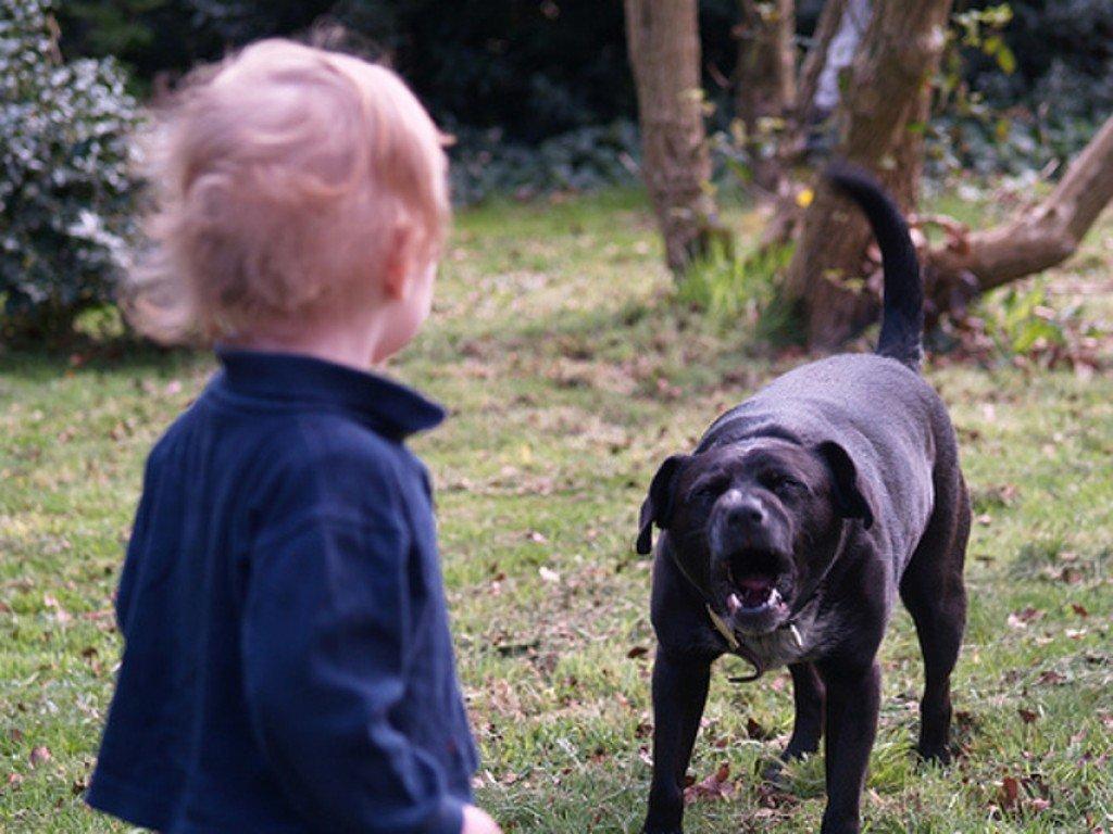 Собака искусала с ног до головы маленького мальчика под Новороссийском