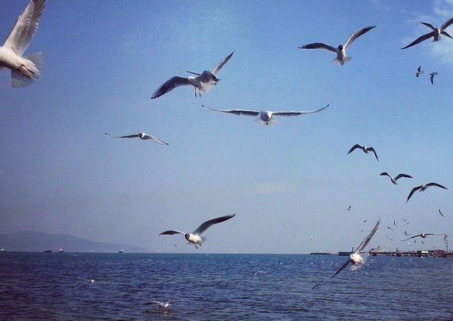 Новороссийцев ожидает 140-ой день лета