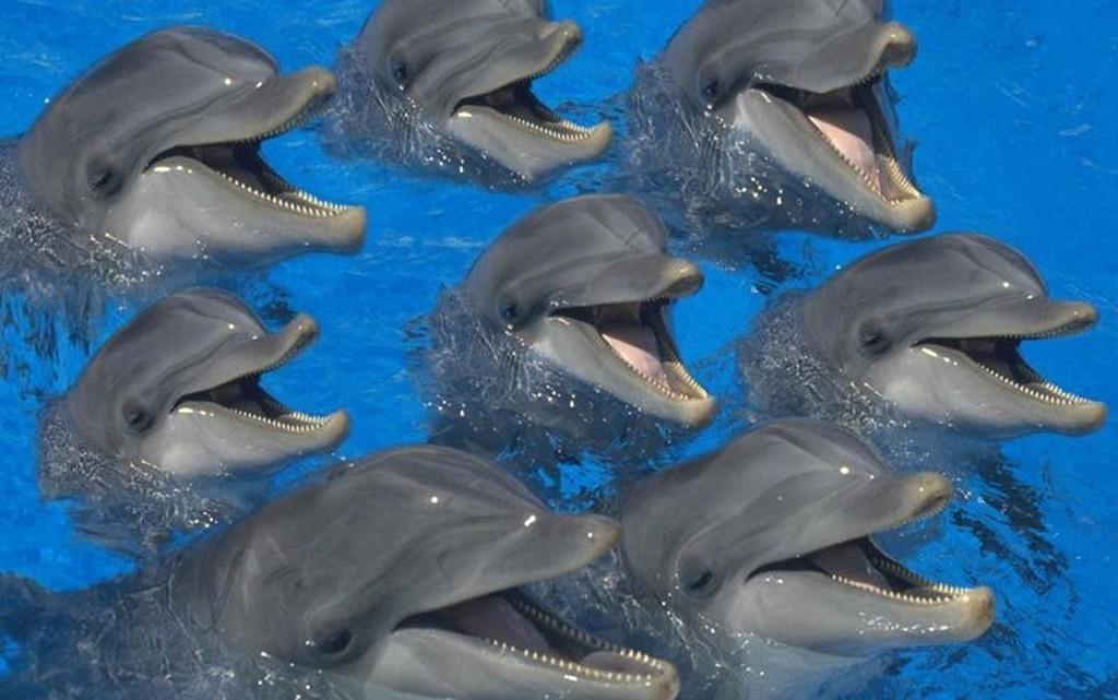 Океанологи из Сочи будут считать дельфинов в Черном море