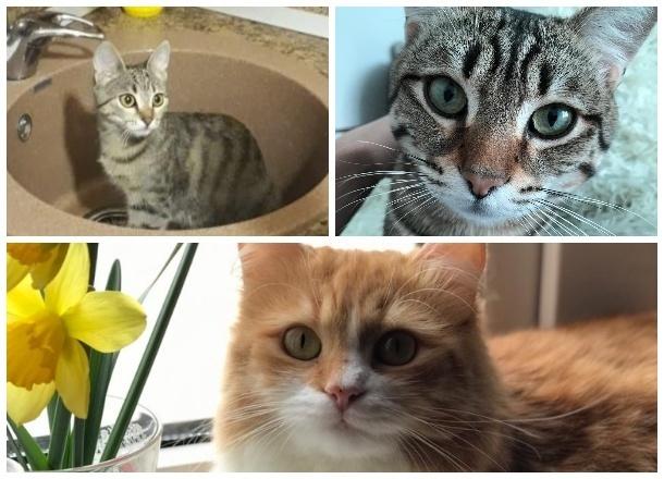 Имена самых красивых котов Новороссийска-2019 уже известны