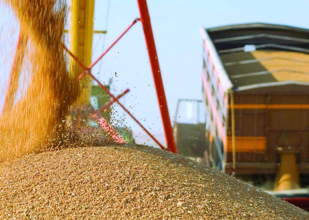 Цены на пшеницу в Новороссийске бьют рекорды