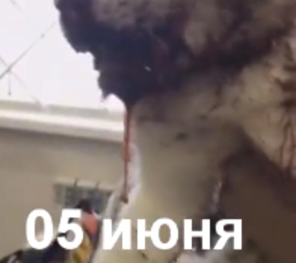 Кот Малыш получил ужасные травмы под колесами автомобиля в Новороссийске