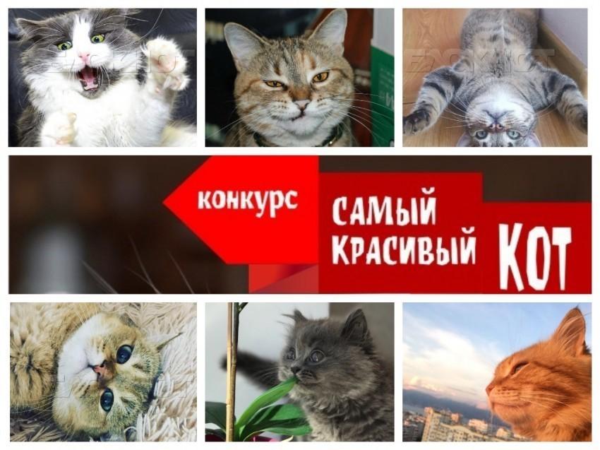 """Завершено голосование в конкурсе «Самый красивый кот - 2018"""""""