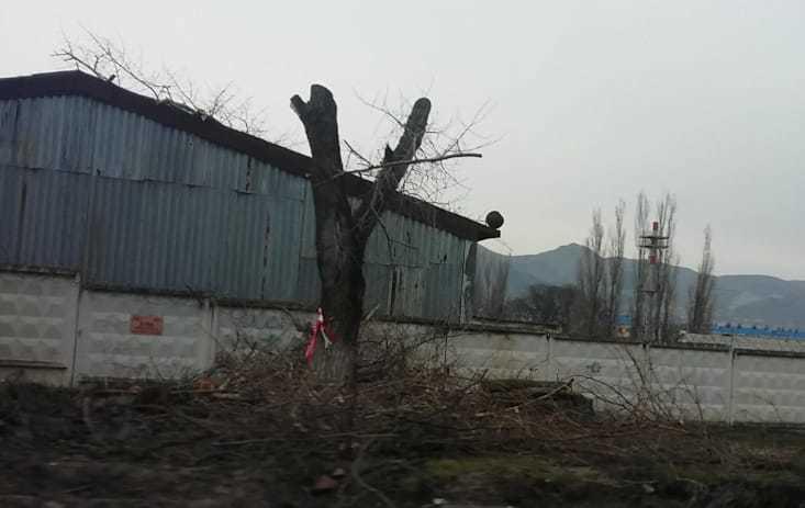 Из-за расширения дороги в Новороссийске страдают деревья