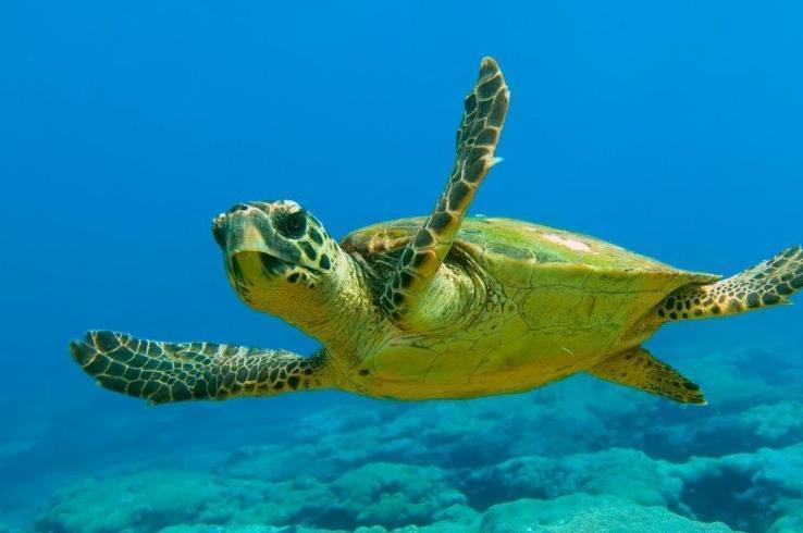 Календарь: 16 июня – Всемирный день морской черепахи
