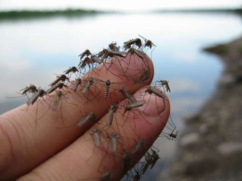 Комары занесли в Новороссийск смертельно-опасный вирус, против которого нет вакцины