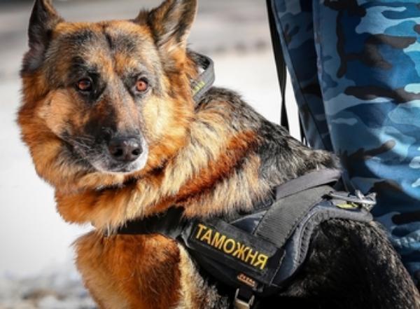 Суд Новороссийска вынес приговор за подмену собаки