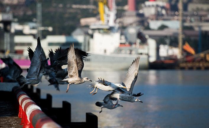 Нефтяную пробку в порту Новороссийска организовала не «Пенелопа»