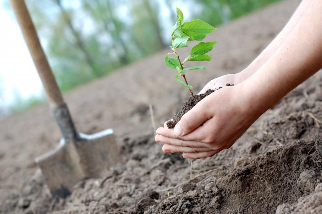 22 гектара дубового леса высадят под Новороссийском