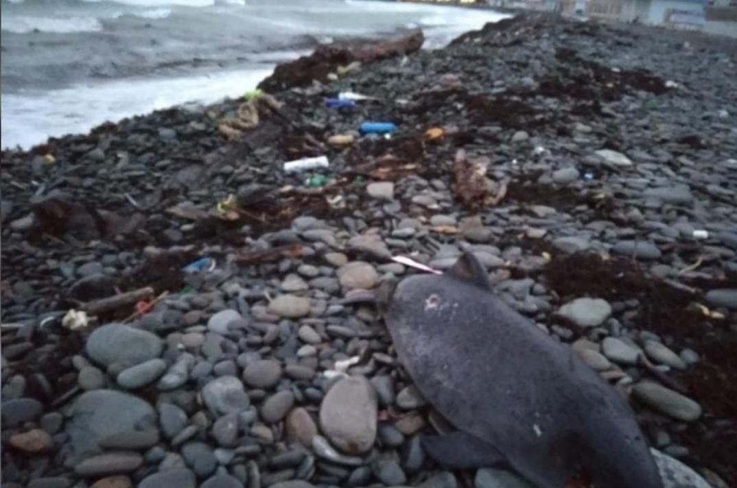 Трагедия на пляже Новороссийска