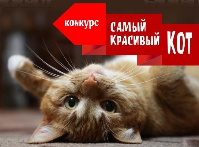 """Стартовало голосование в конкурсе «Самый красивый кот - 2018"""""""