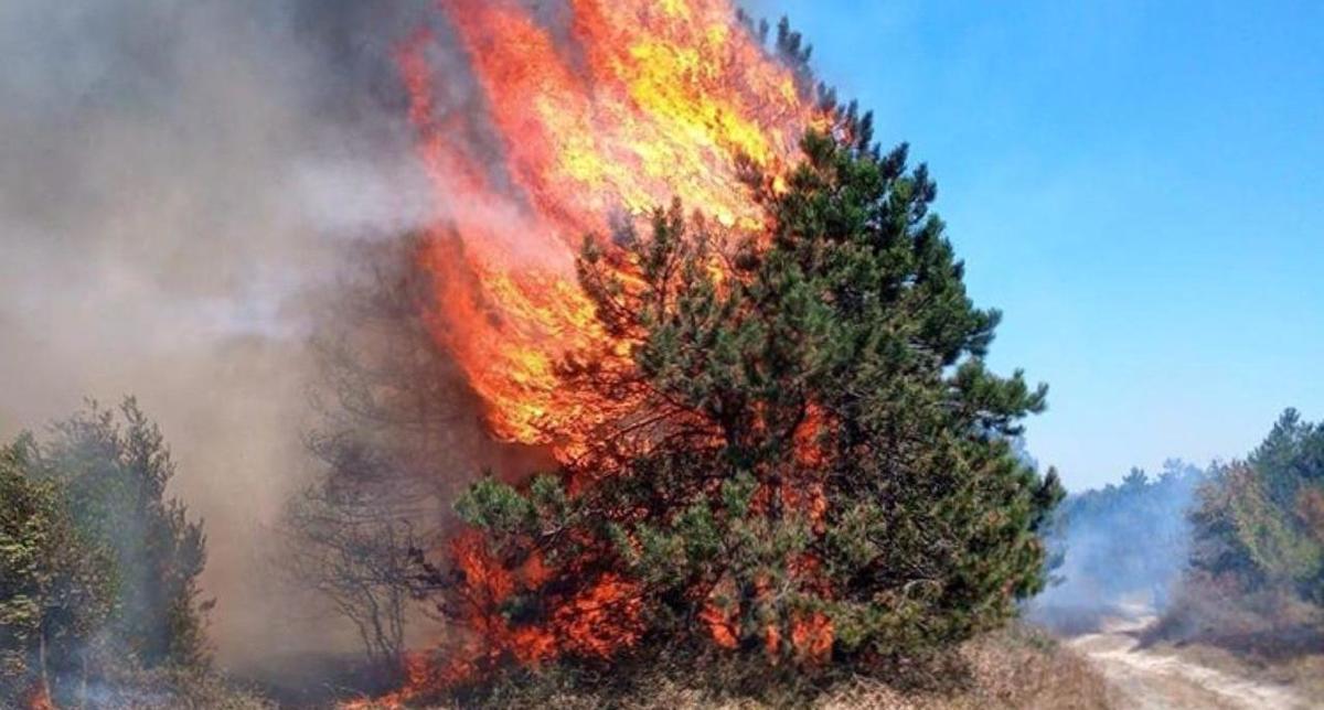 В пригороде Новороссийска вспыхнул очередной пожар