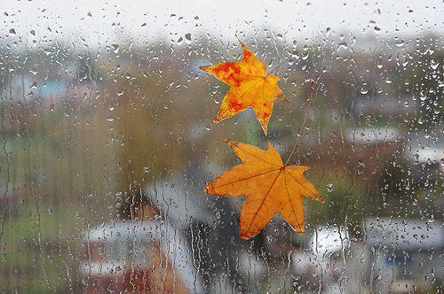 В пятницу жителям Новороссийска лучше взять с собой зонт