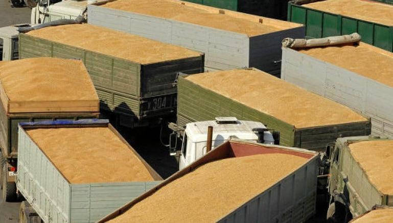 Россельхознадзор устроил экспортерам зерна коллапс в Новороссийске