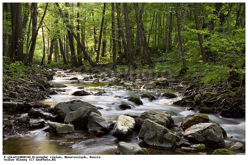 Календарь Новороссийска: 21 марта - Международный день лесов