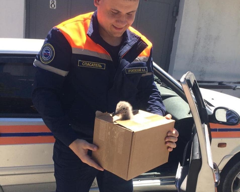 Птенца чайки спасли настоящие «человеки» Новороссийска