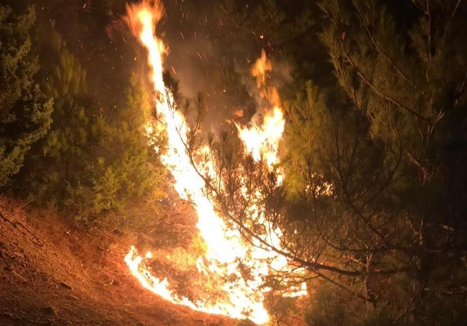 Новороссийцы могут спасти леса от возможных пожаров