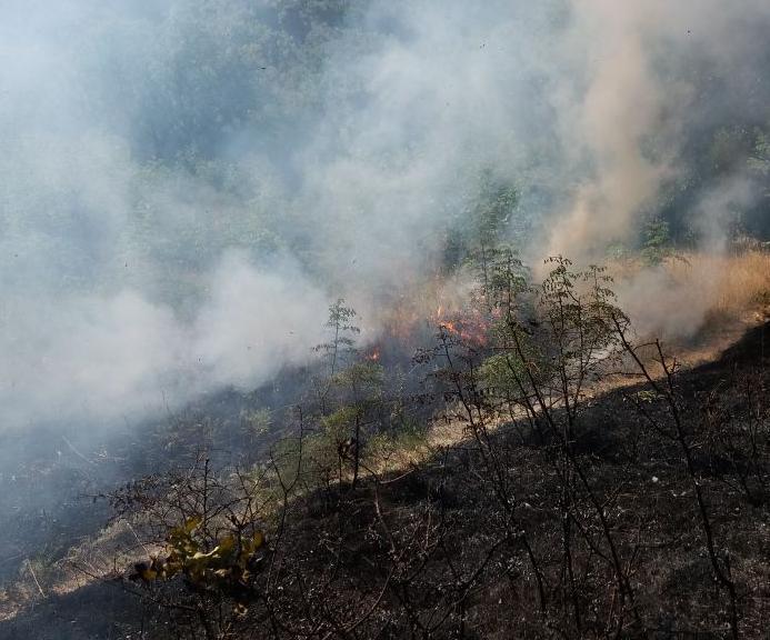 В Новороссийске горит лес на горе Колдун
