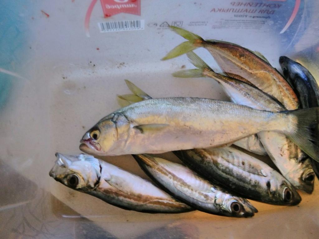 рыба гл.jpg
