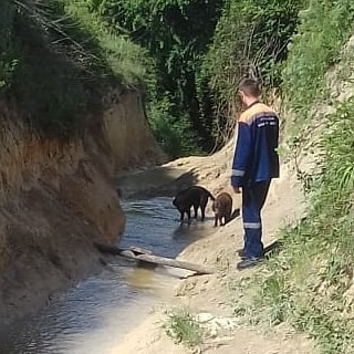 собака со спас.jpg